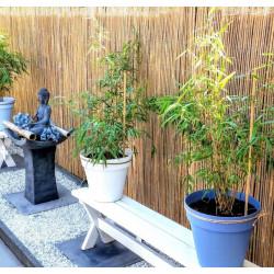 Osłona na płot ogrodzenie mata bambusowa 1x6m